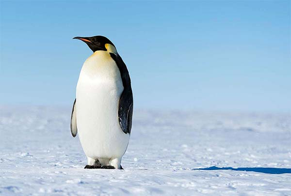 algoritmo-google-penguin