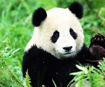 algoritmi-google-panda