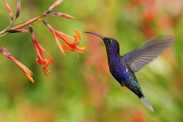 algoritmo-google-hummingbird